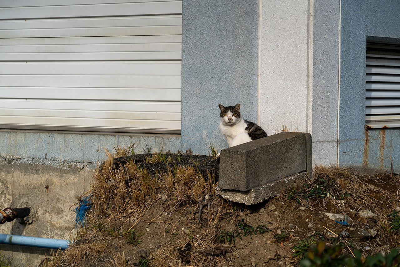 海員生協 大黒3号店近くにいた猫