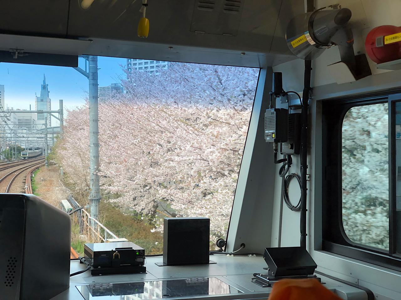 川崎駅ラゾーナ広場(川崎駅北口西)の桜並木