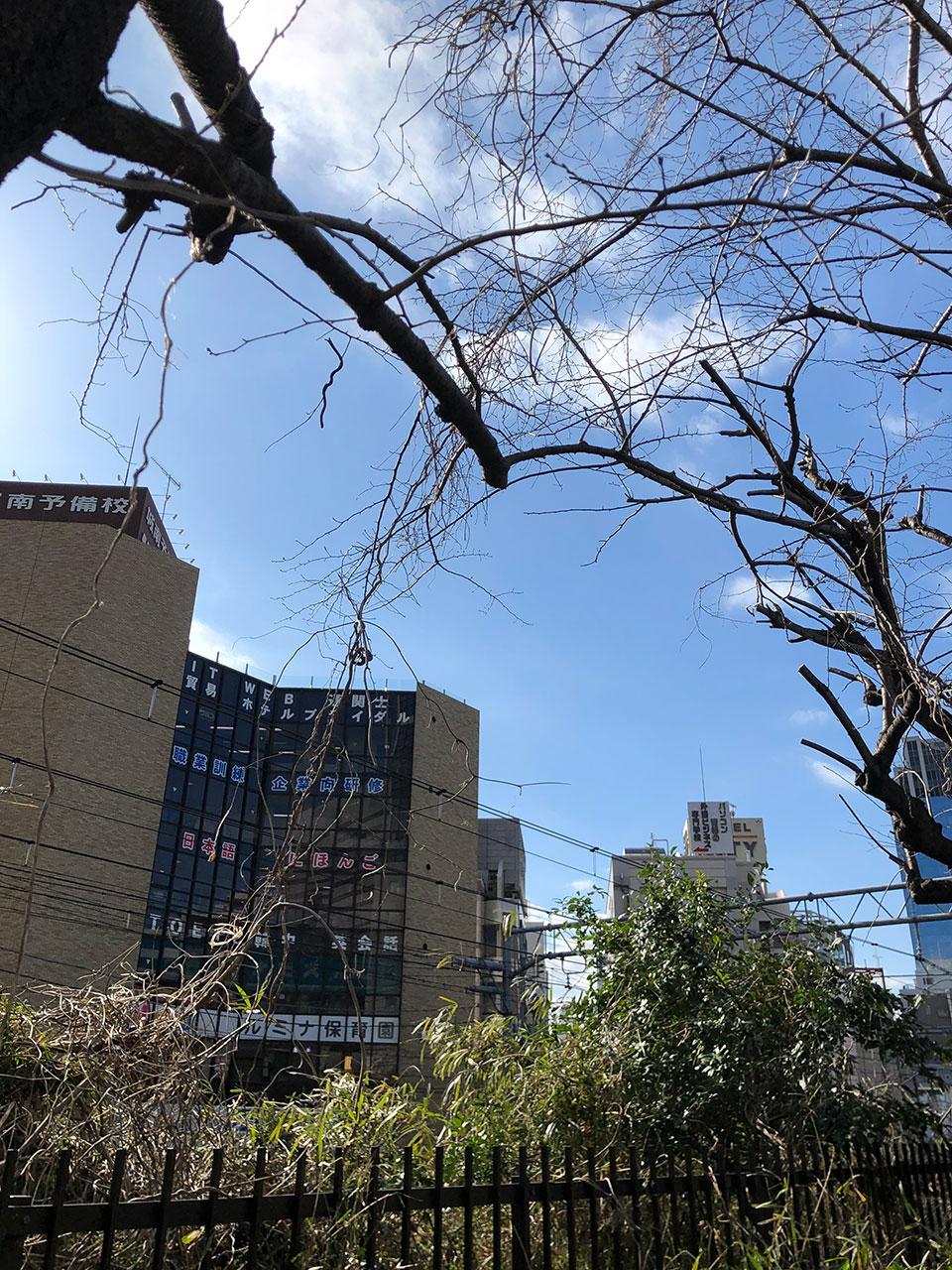 越境してきた葛の蔓と伐採された桜の枝