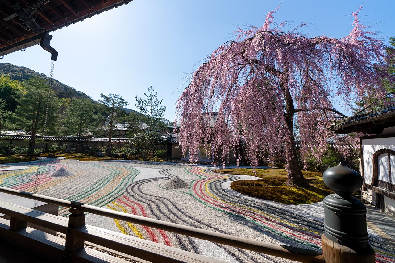 2020年3月23日(月)観光客のいない高台寺