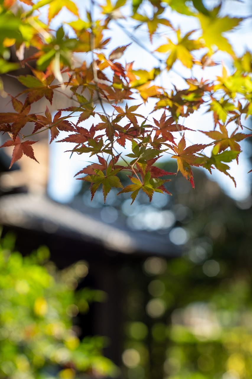 鶴見〈横溝屋敷〉の紅葉