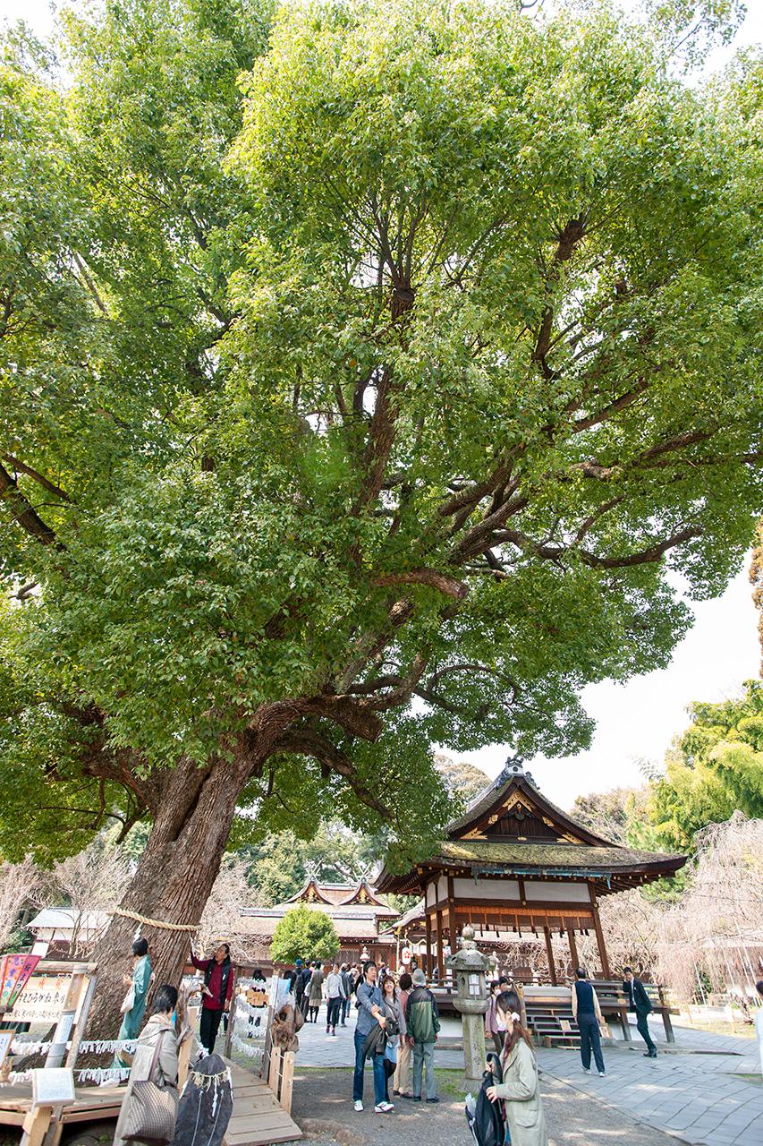 平野神社(ひらのじんじゃ)