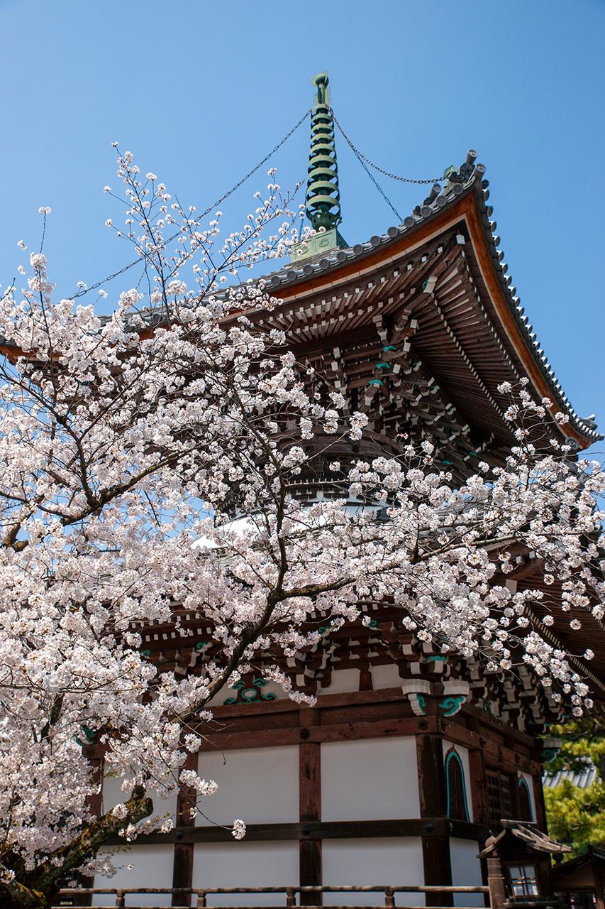 本法寺(ほんぽうじ)