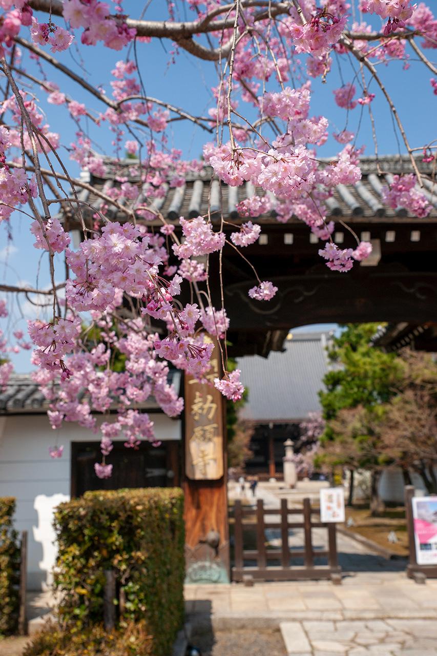 妙顕寺(みょうけんじ)