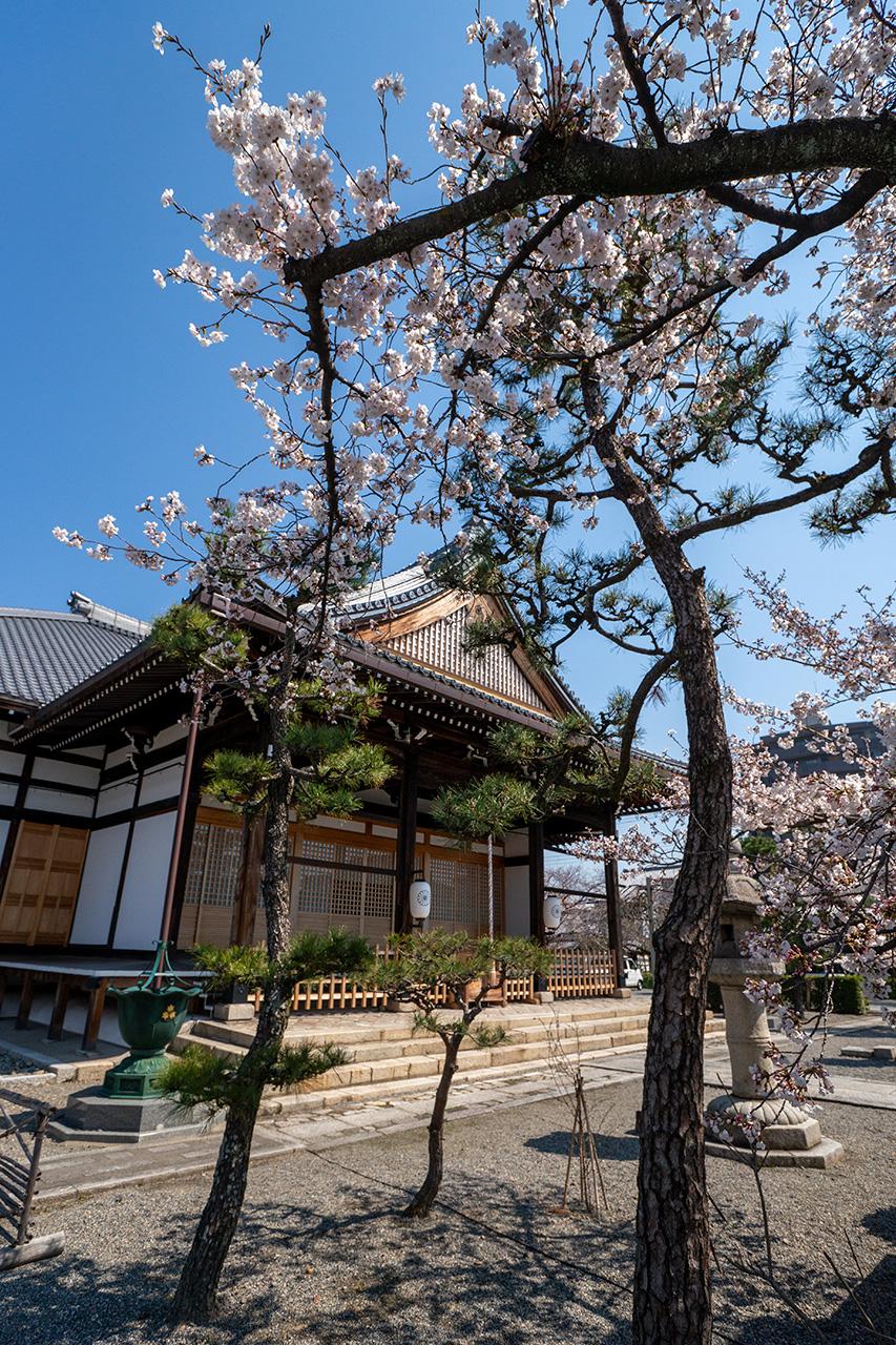 妙蓮寺(みょうれんじ)