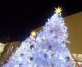 12/12 白いツリーが並んでました(於 三井アウトレットパーク幕張)