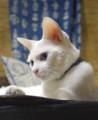 [りゃんちゃん] 01/27 猫の顔はこの角度が美しいと思う