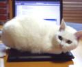 [かすみさん] 02/06 「殿、パソコンを温めておきました」みたいな