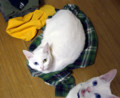 [かすみさん][りゃんちゃん] 04/21 服を床に脱ぎ捨てちゃダメだってば!……こうなるから