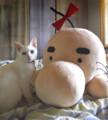 [りゃんちゃん]06/03 どせいさんが届きました。……でかっ!