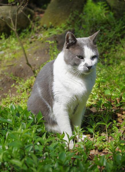 100418 江の島で会った猫たち4 (於 江の島)