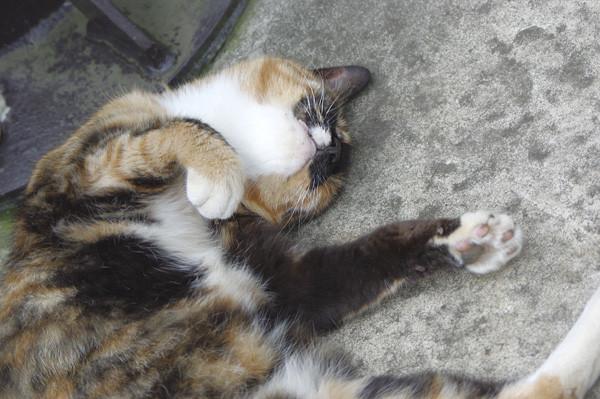 100812 江の島で会った猫たち2 (於 江の島)