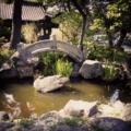橋と金魚。