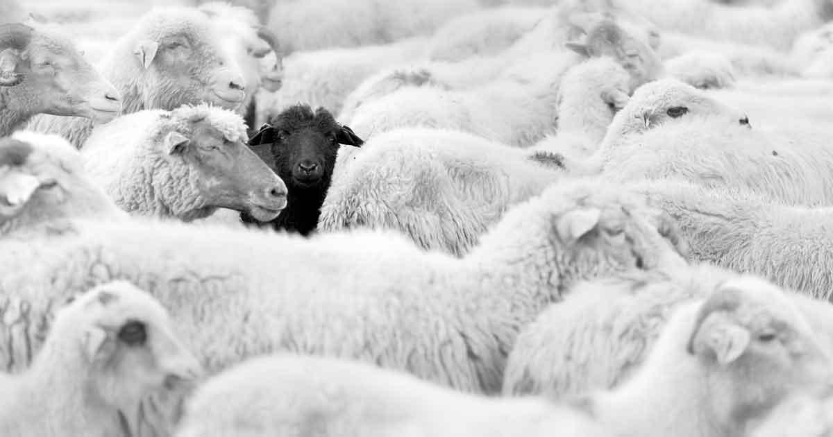 黒い羊効果4
