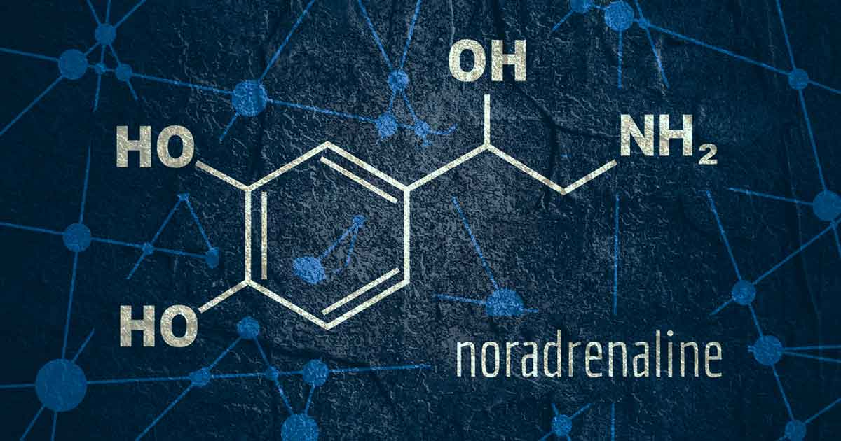 ノルアドレナリンの効果まとめ2