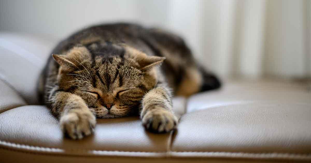 低気圧で眠くなる原因