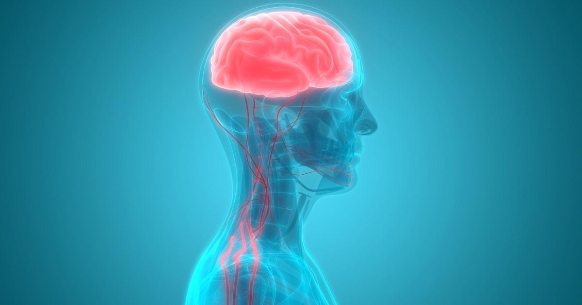 脳への血流-01