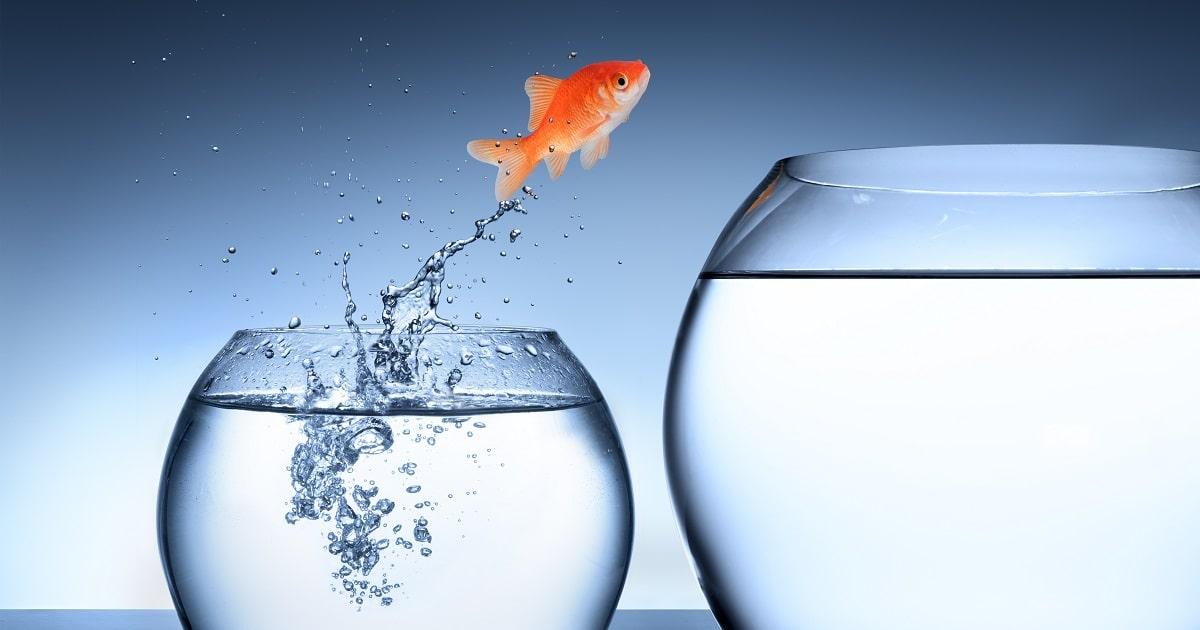 現状を打破する気合いと根性の金魚