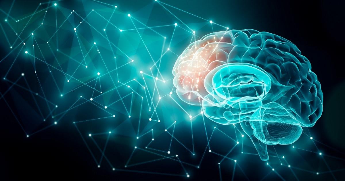 前頭葉が活性化した脳