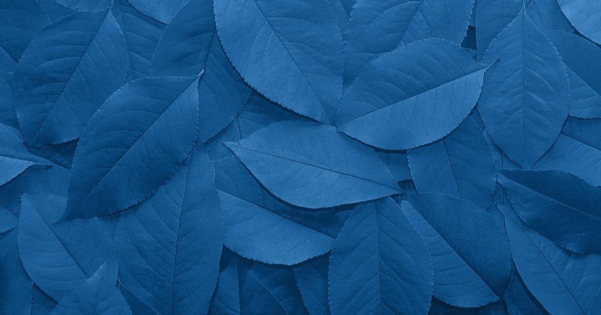 青い葉っぱで表現されたクラシックブルー