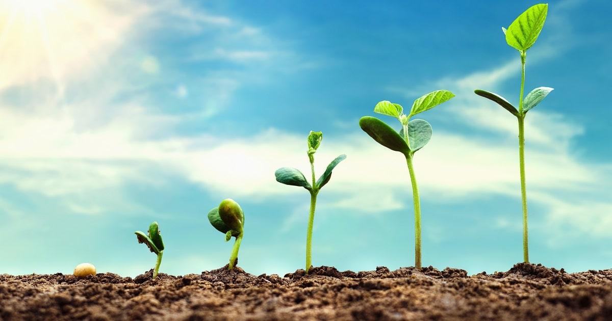 太陽の光を浴びながら芽吹く植物たち