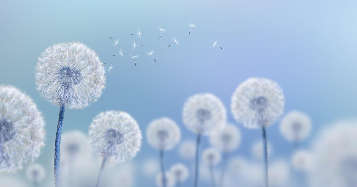 HSPのイメージ。静かに繊細に風になびくタンポポ。