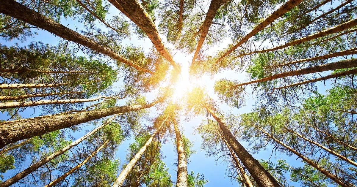 森林浴がもたらす3つの効果05