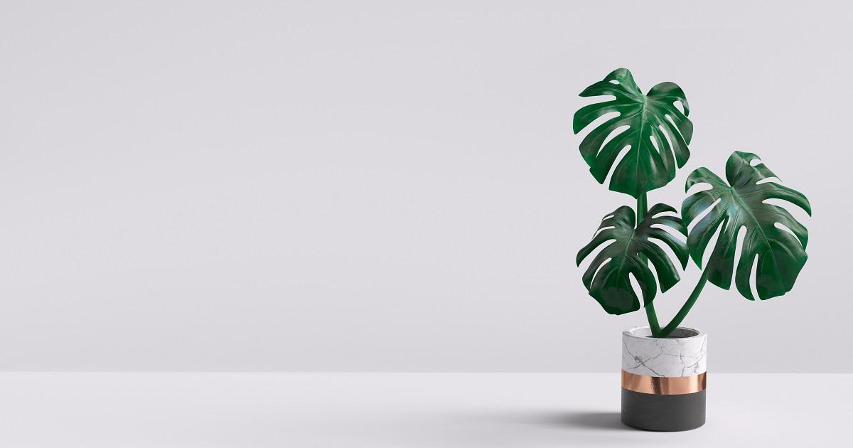 植物をライフスタイルに取り入れよう03