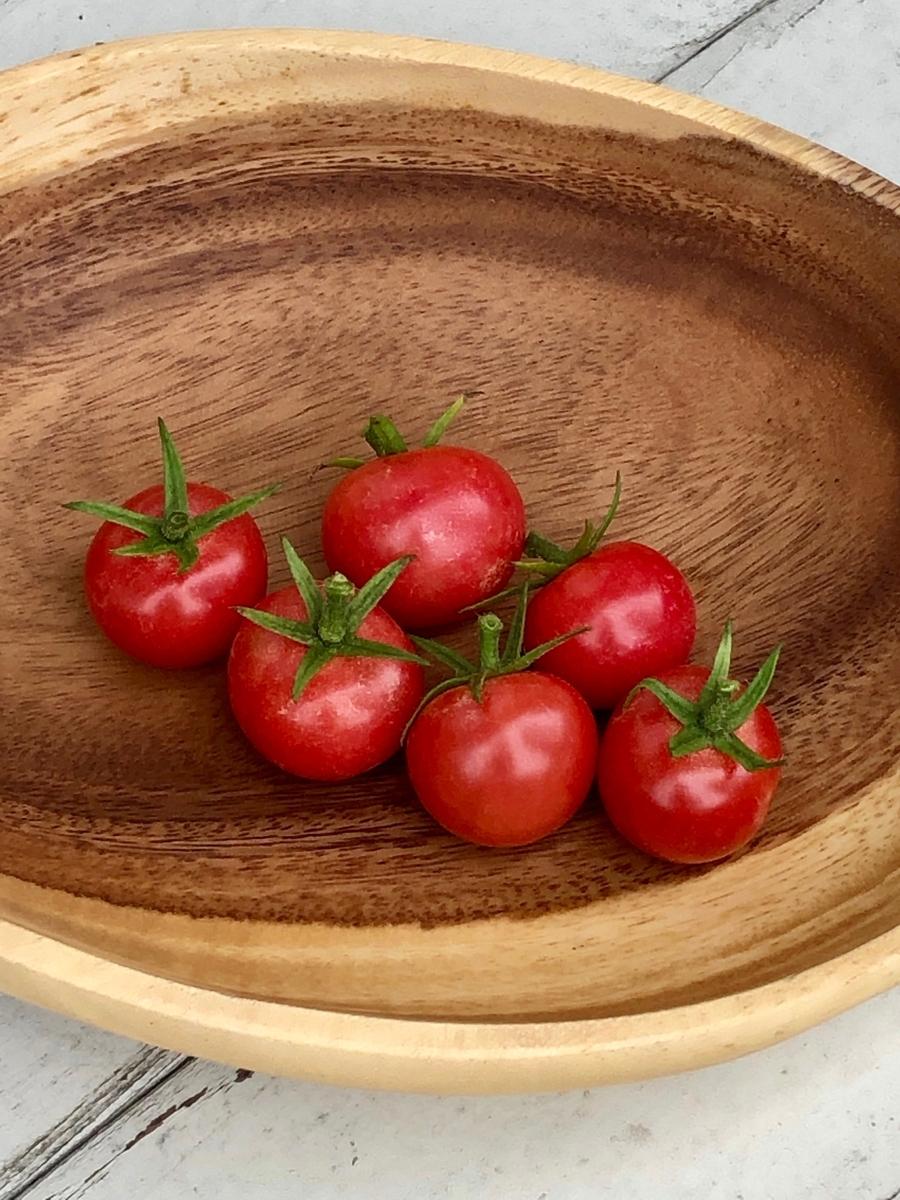 獲れたてプチトマト