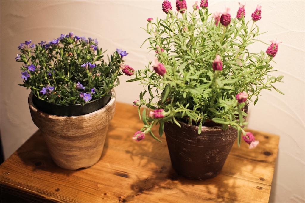 f:id:鉢植えペイント1