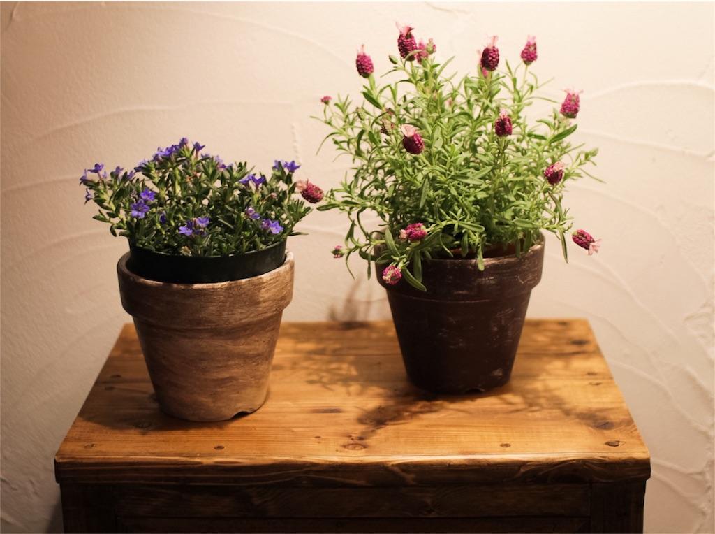 f:id:植木鉢塗装7