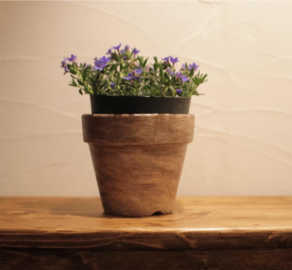 f:id:鉢植えペイント