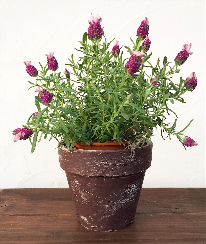 f:id:植木鉢塗装3
