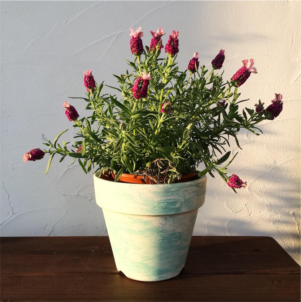 f:id:鉢植えDIY
