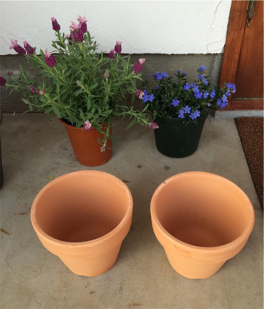 f:id:鉢植えペイント2