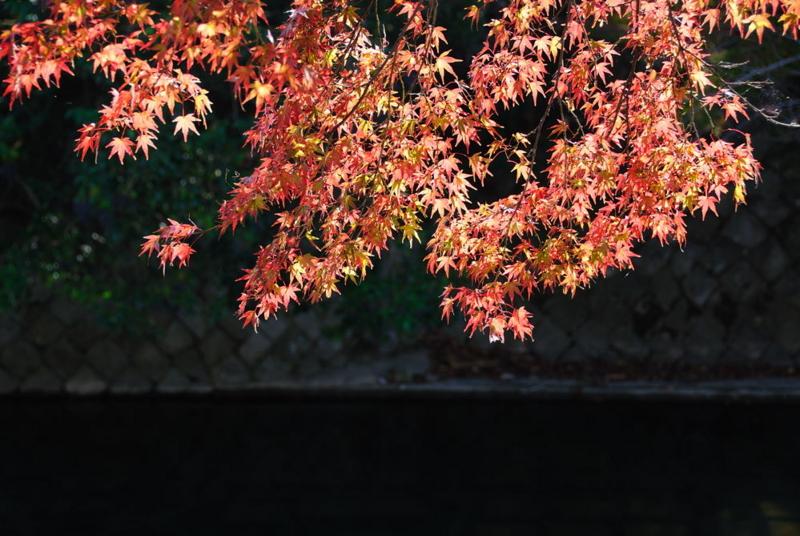 f:id:shakuyamame:20071124115207j:image