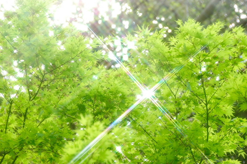 f:id:shakuyamame:20080419141307j:image