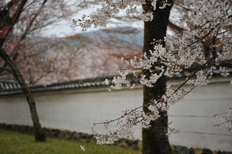 f:id:shakuyamame:20090404120428j:image