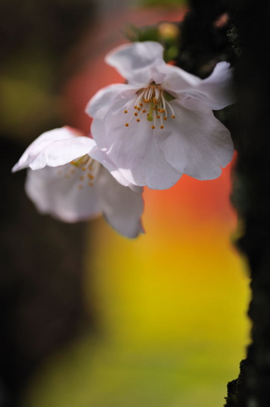f:id:shakuyamame:20090405121328j:image