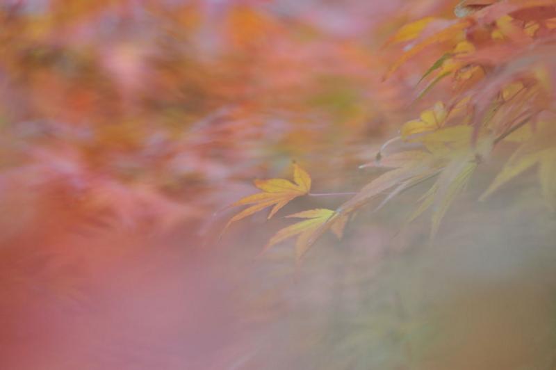 f:id:shakuyamame:20091116140415j:image