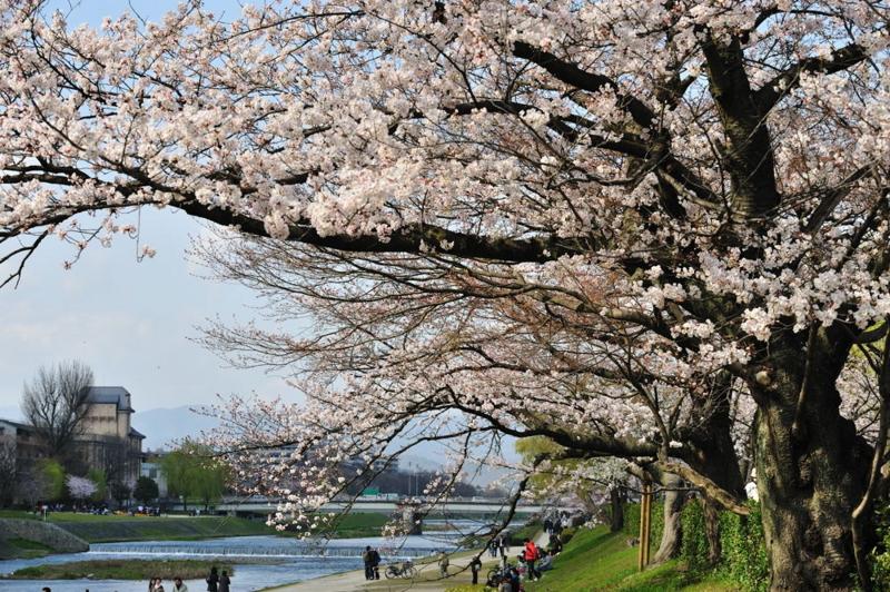 f:id:shakuyamame:20100403145951j:image
