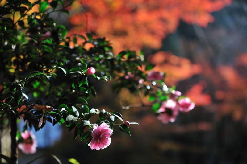 f:id:shakuyamame:20101121125040j:image