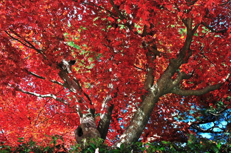 f:id:shakuyamame:20101124130821j:image