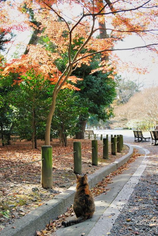 f:id:shakuyamame:20101204122839j:image