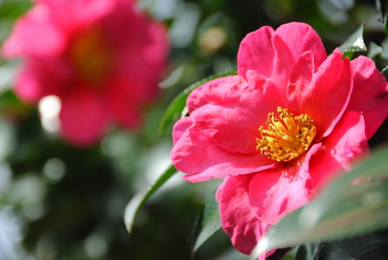 f:id:shakuyamame:20101212131137j:image