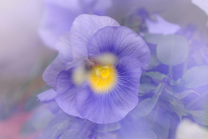 f:id:shakuyamame:20110115112504j:image