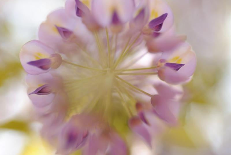 f:id:shakuyamame:20110429113711j:image