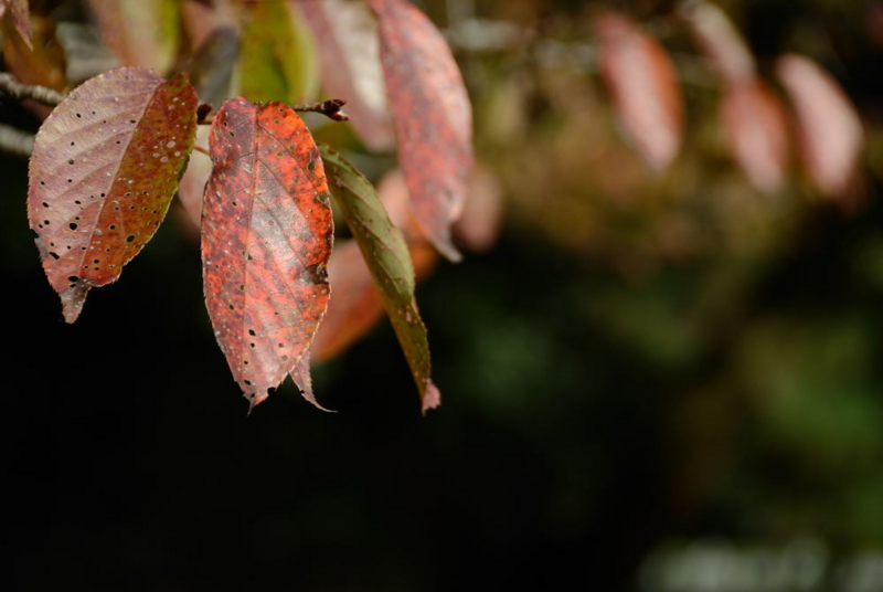 f:id:shakuyamame:20111112141204j:image