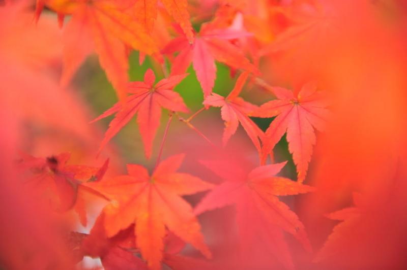 f:id:shakuyamame:20111120142102j:image