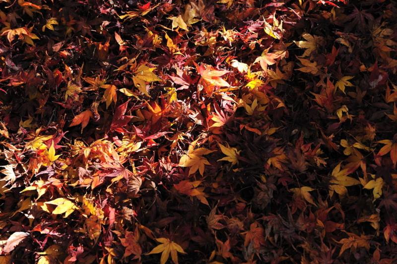 f:id:shakuyamame:20111204141545j:image